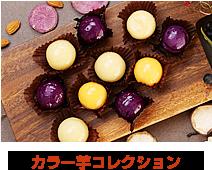 カラー芋コレクション